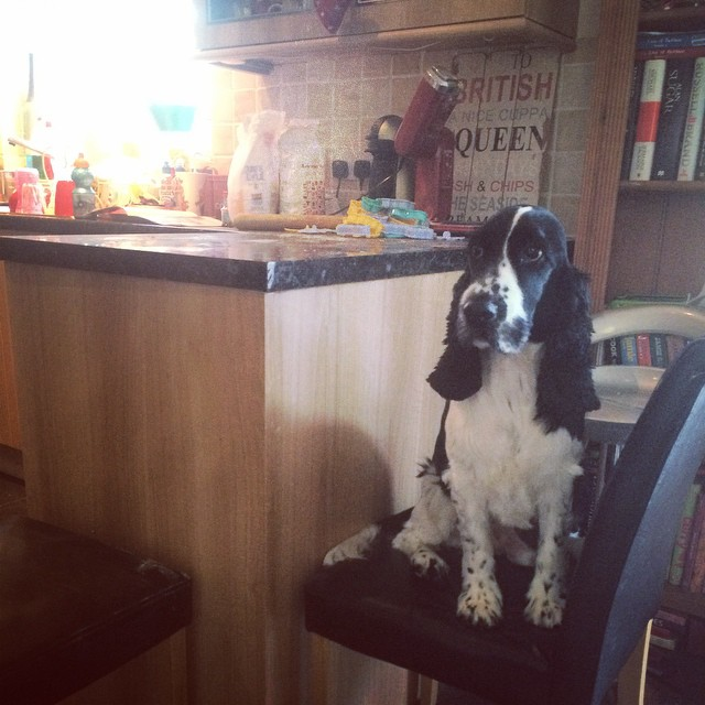 I think someone wants to make cookies too! #dogsofinstagram #cookie #baking #dog #family #cheeky
