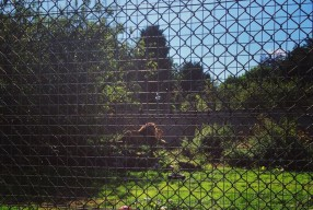 (241/365) Sunday 31st August 2014 – The Zoo!