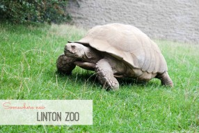 Somewhere new: Linton Zoo!