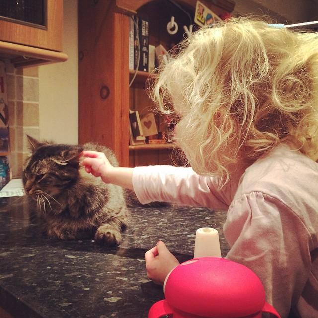 Islas tormenting the cat: poking his ears. I'm  very surprised Rocky hasn't walked away yet. #catsofinstagram #earpoke