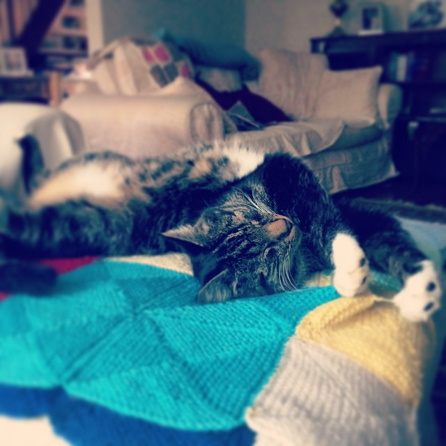 Someone's comfortable #catsofinstagram #patchypoohbear