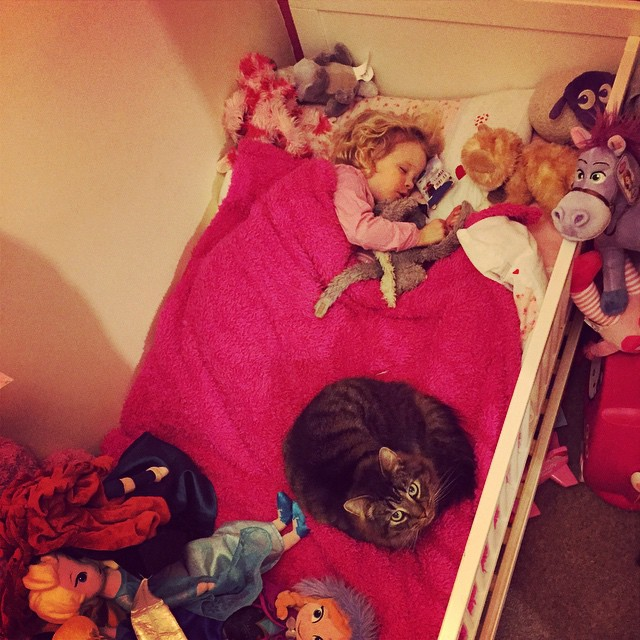 Ahh Isla has a little protector for the evening: #catsofinstagram #protecting #pets