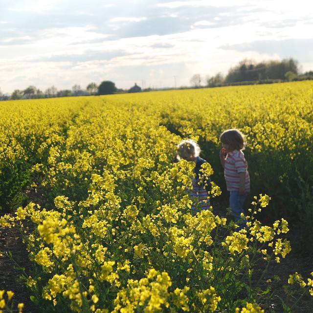 The beautiful little children in a beautiful yellow field #adventure #rapeseed #yellow #sunset #landscape #happy #children