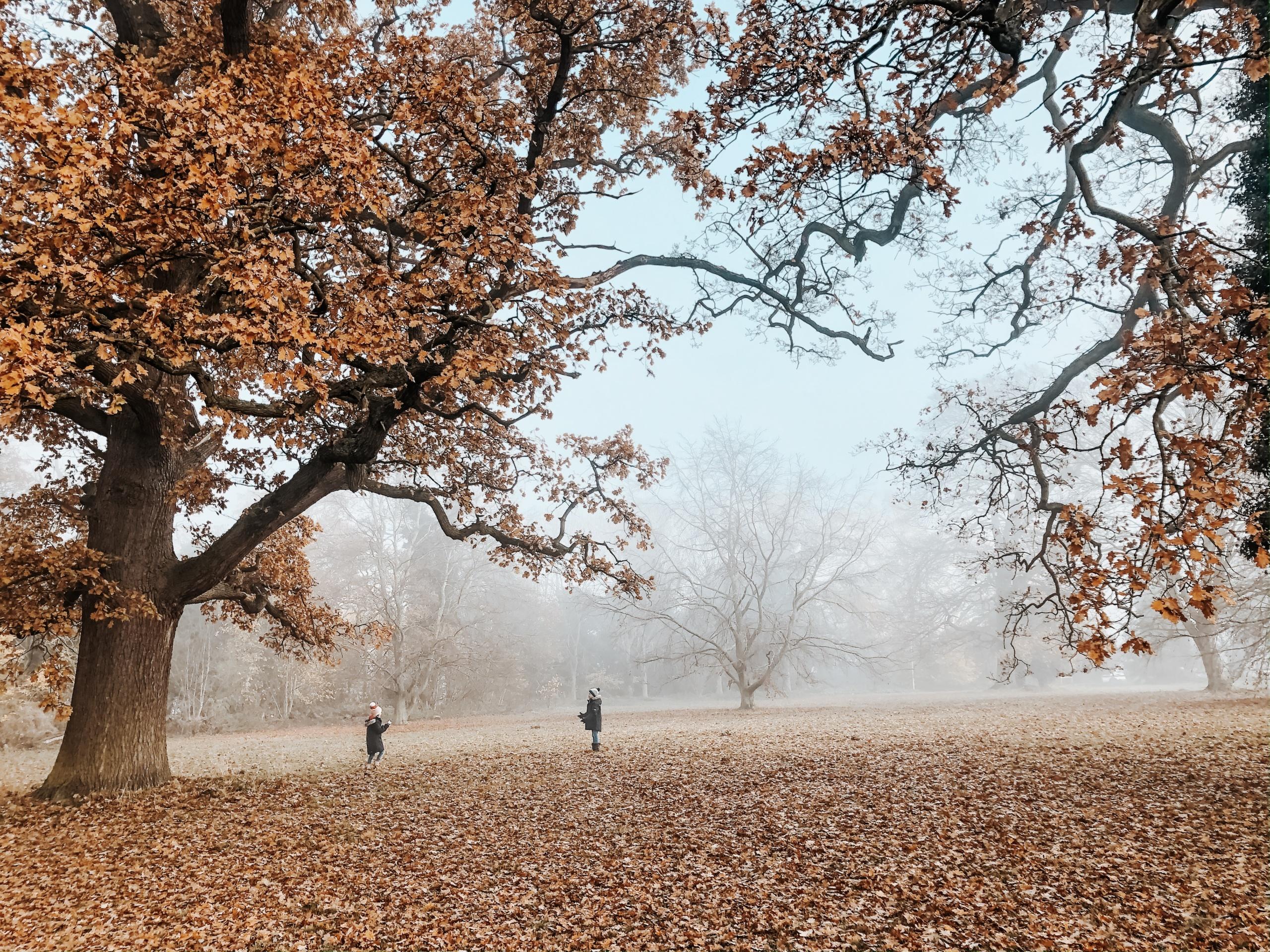 Misty Autumn Walk